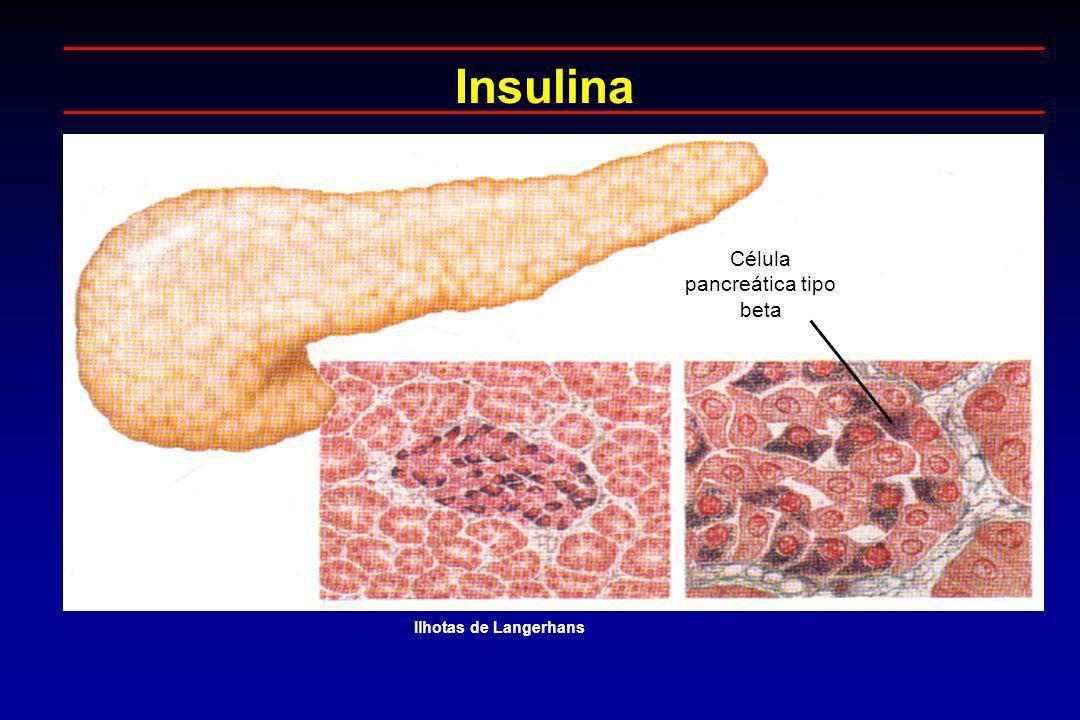 Célula pancreática tipo beta