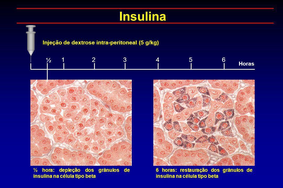 Insulina ½ 1 2 3 4 5 6 Injeção de dextrose intra-peritoneal (5 g/kg)