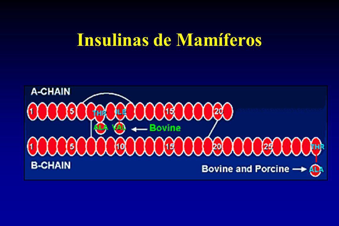 Insulinas de Mamíferos
