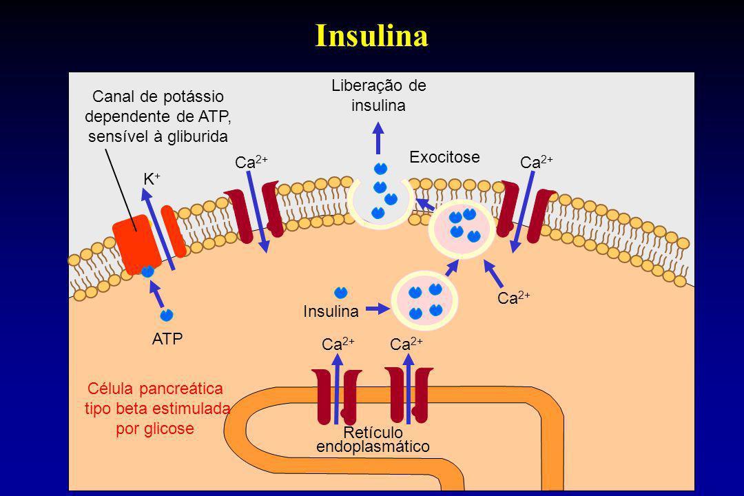Insulina Liberação de insulina