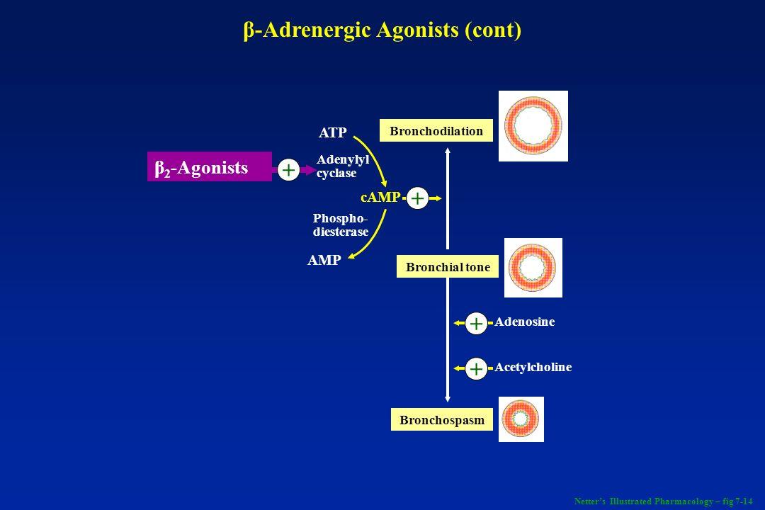 β-Adrenergic Agonists (cont)