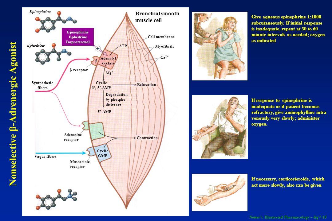 Epinephrine Ephedrine Isoproterenol