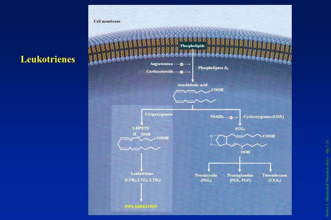 Prostaglandins (PGE, PGF)