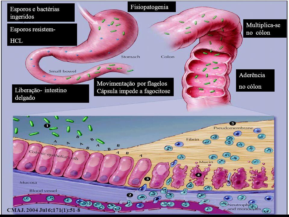 Esporos e bactérias ingeridos Fisiopatogenia