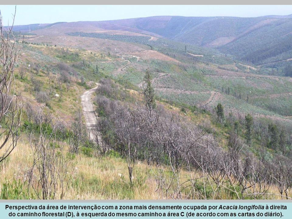 Perspectiva da área de intervenção com a zona mais densamente ocupada por Acacia longifolia à direita do caminho florestal (D), à esquerda do mesmo caminho a área C (de acordo com as cartas do diário).