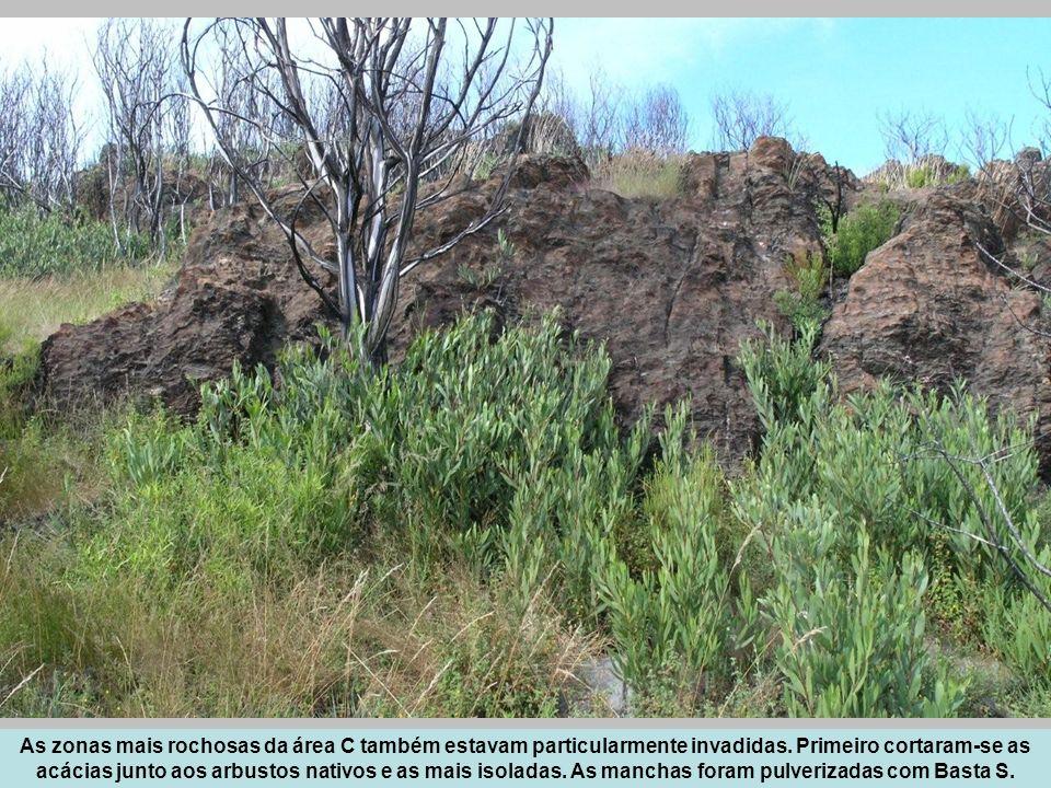 As zonas mais rochosas da área C também estavam particularmente invadidas.