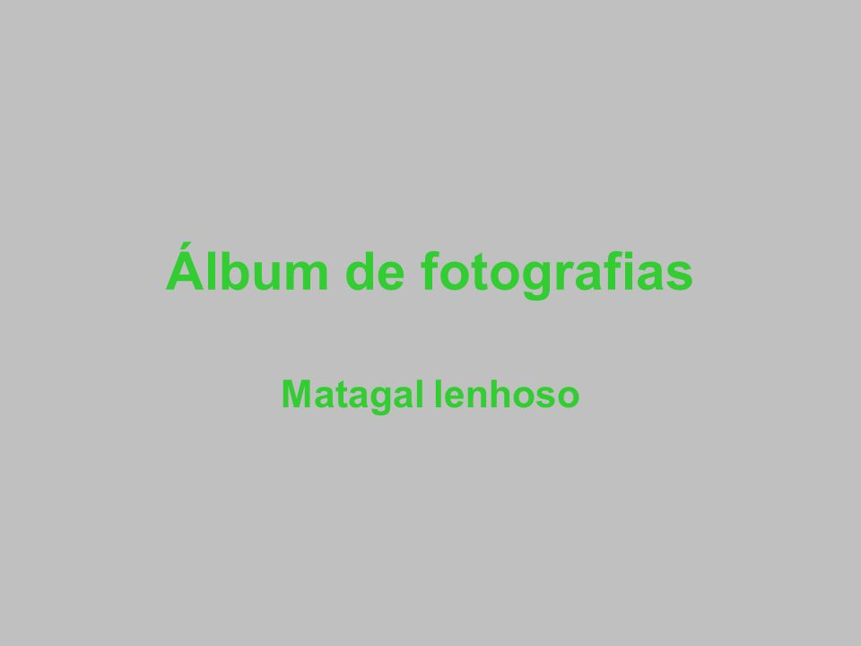 Álbum de fotografias Matagal lenhoso