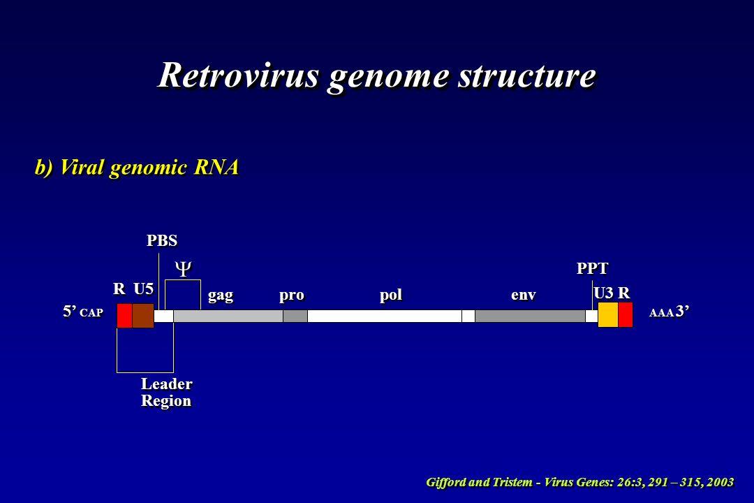 Retrovirus genome structure