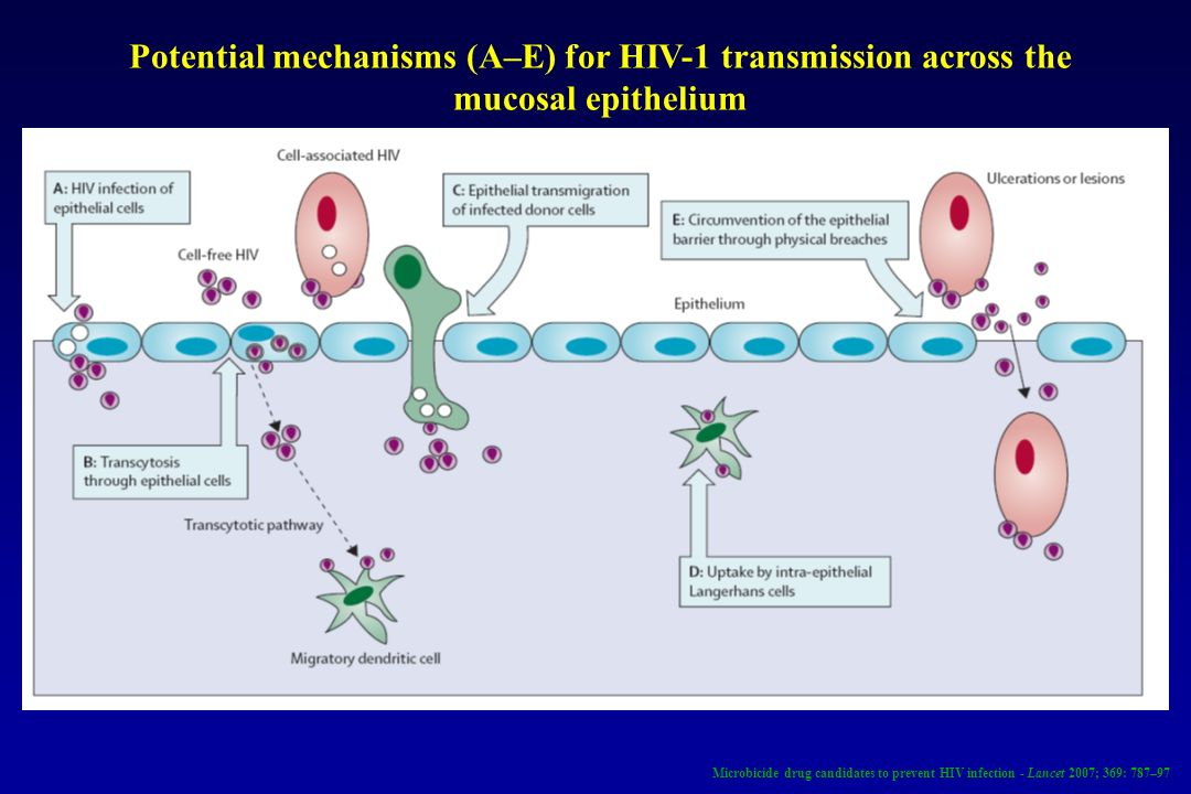 Potential mechanisms (A–E) for HIV-1 transmission across the mucosal epithelium