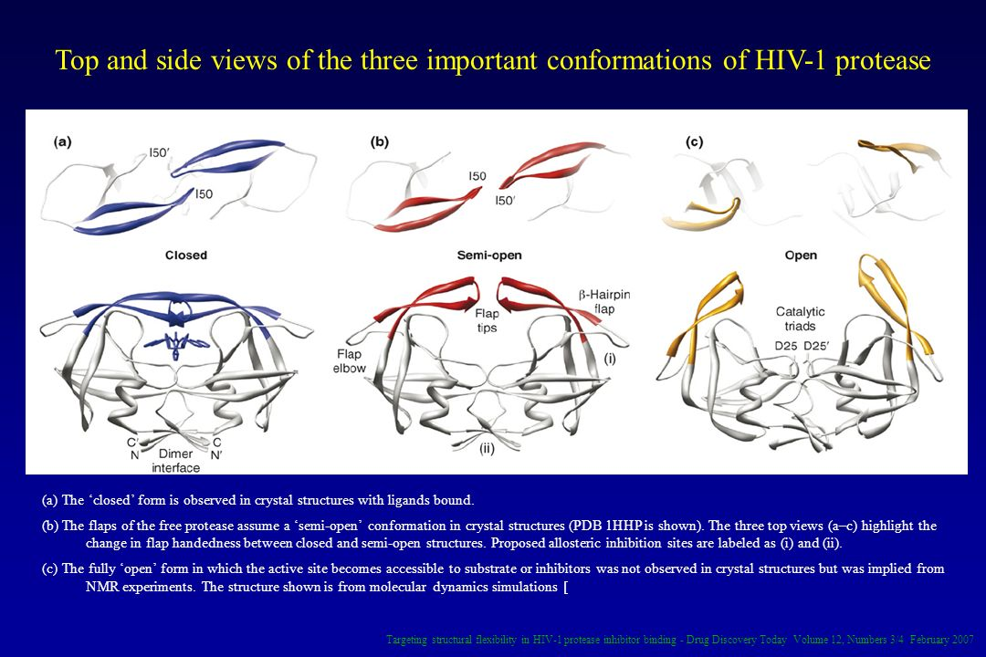 Top and side views of the three important conformations of HIV-1 protease