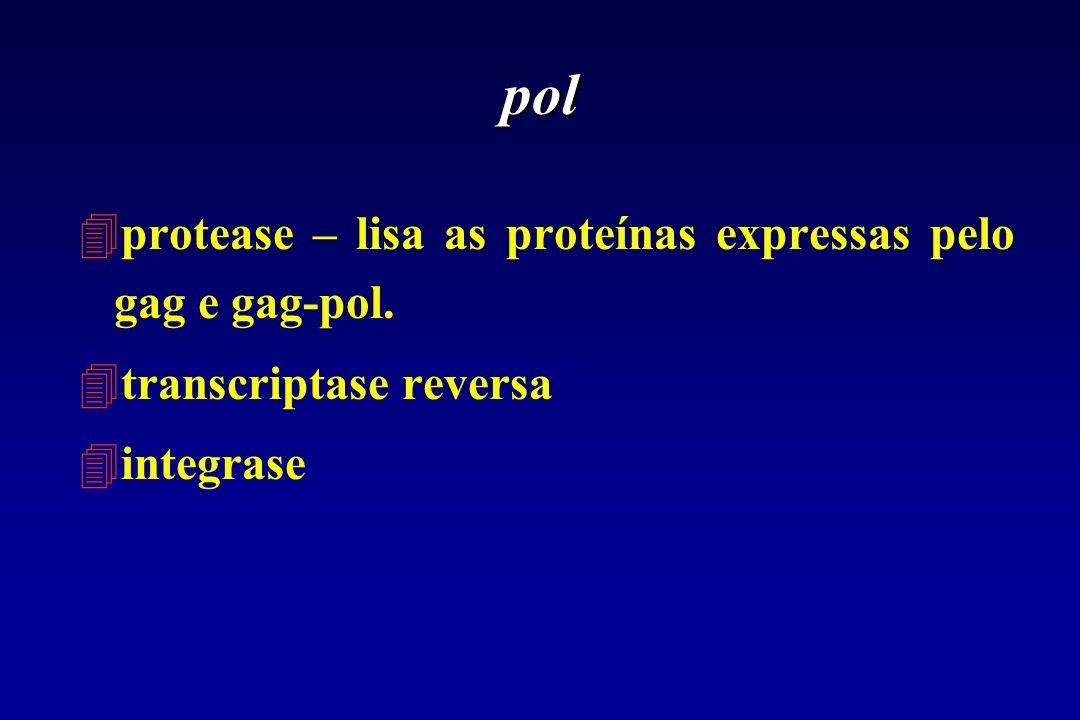 pol protease – lisa as proteínas expressas pelo gag e gag-pol.