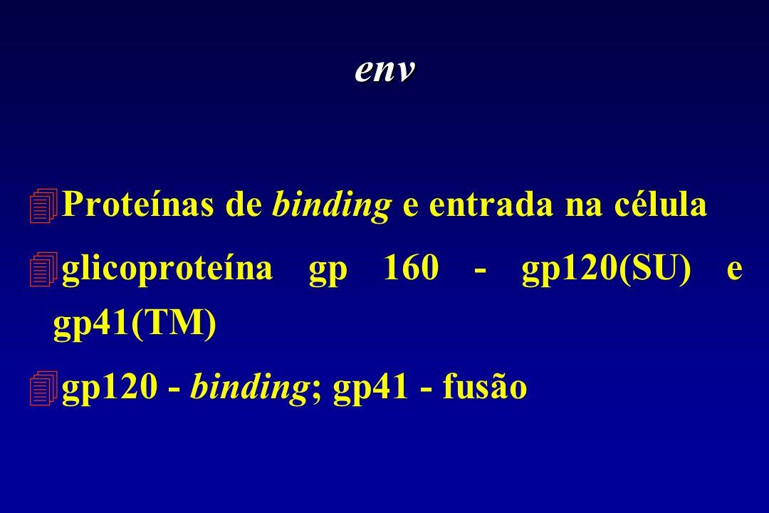 env Proteínas de binding e entrada na célula