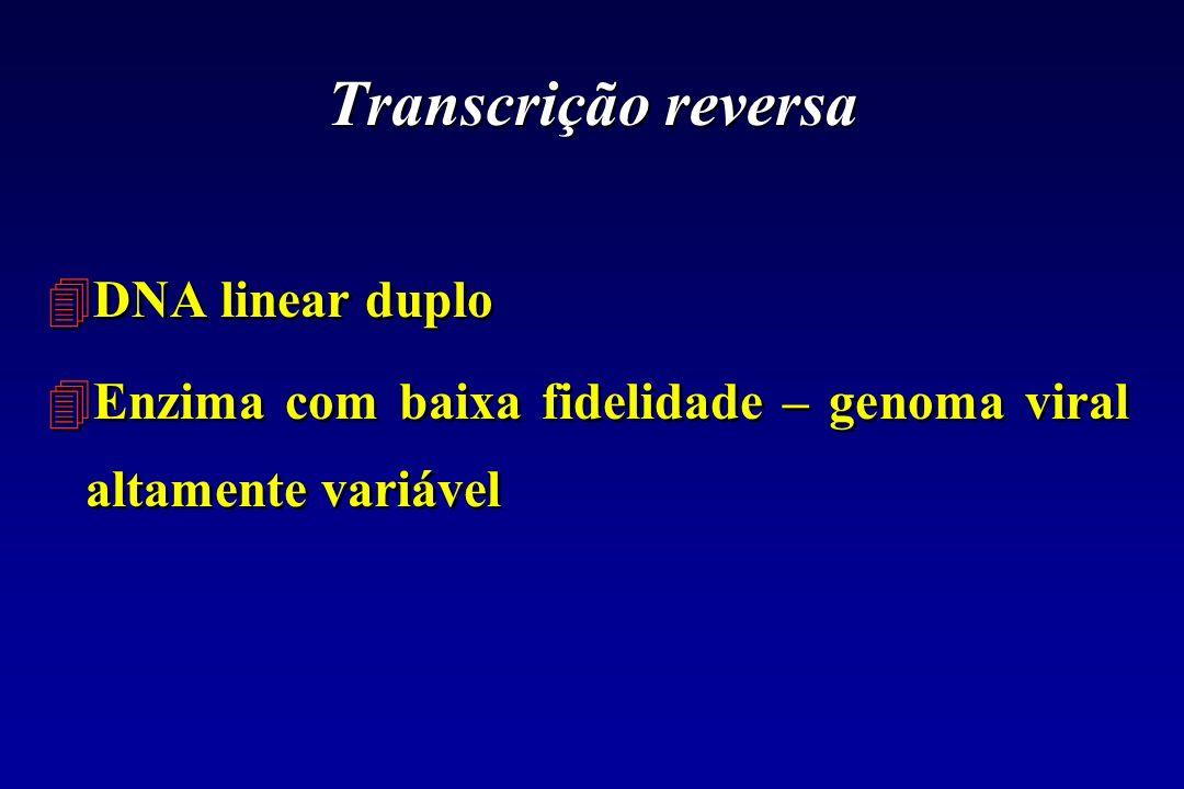 Transcrição reversa DNA linear duplo