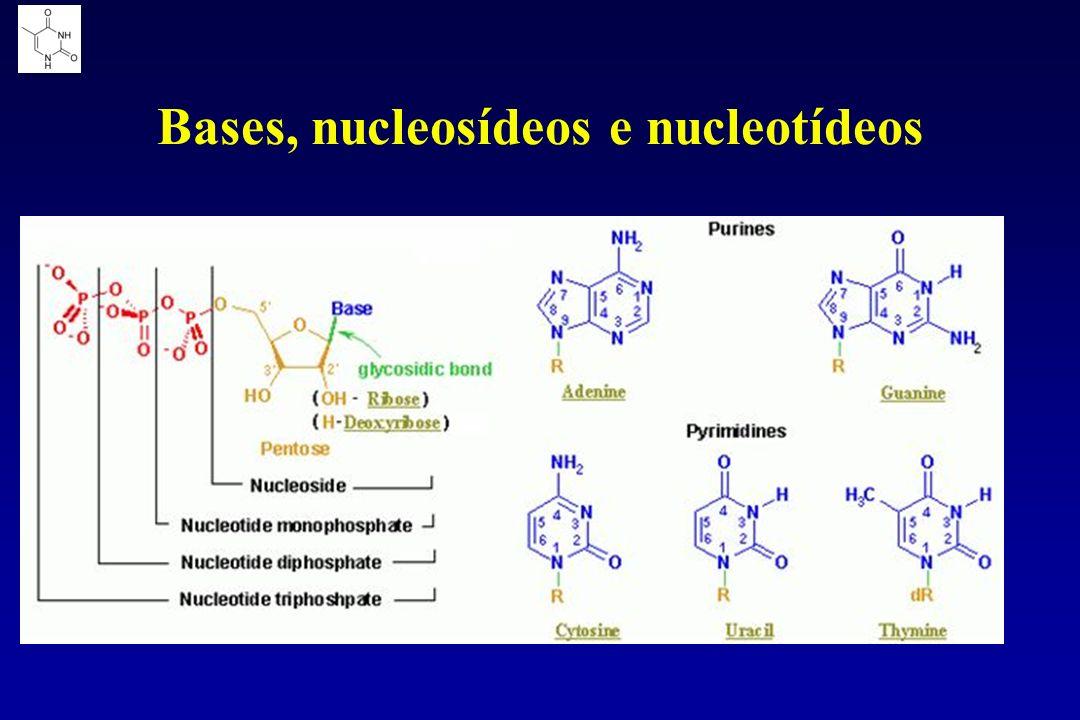 Bases, nucleosídeos e nucleotídeos