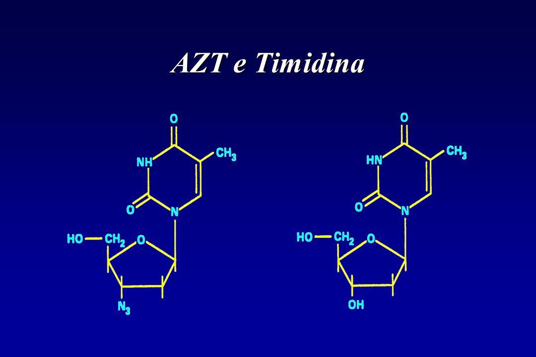 AZT e Timidina