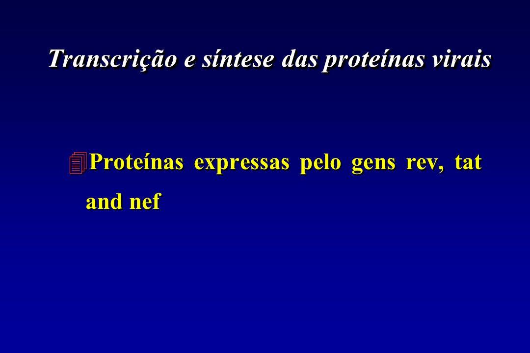 Transcrição e síntese das proteínas virais