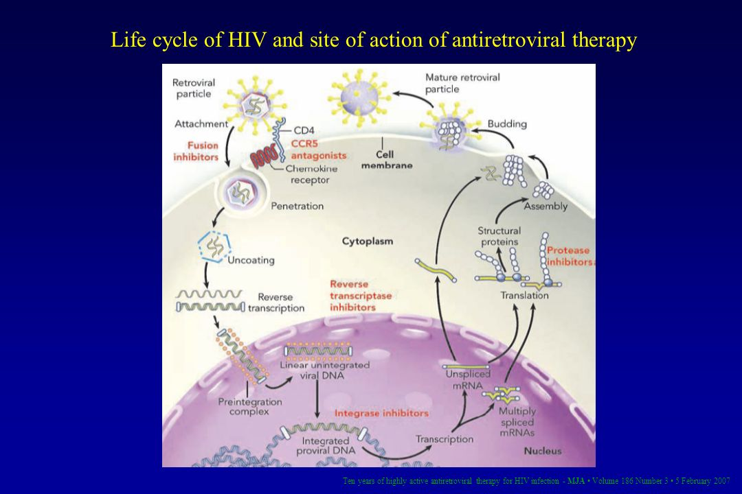 Life cycle of HIV and site of action of antiretroviral therapy