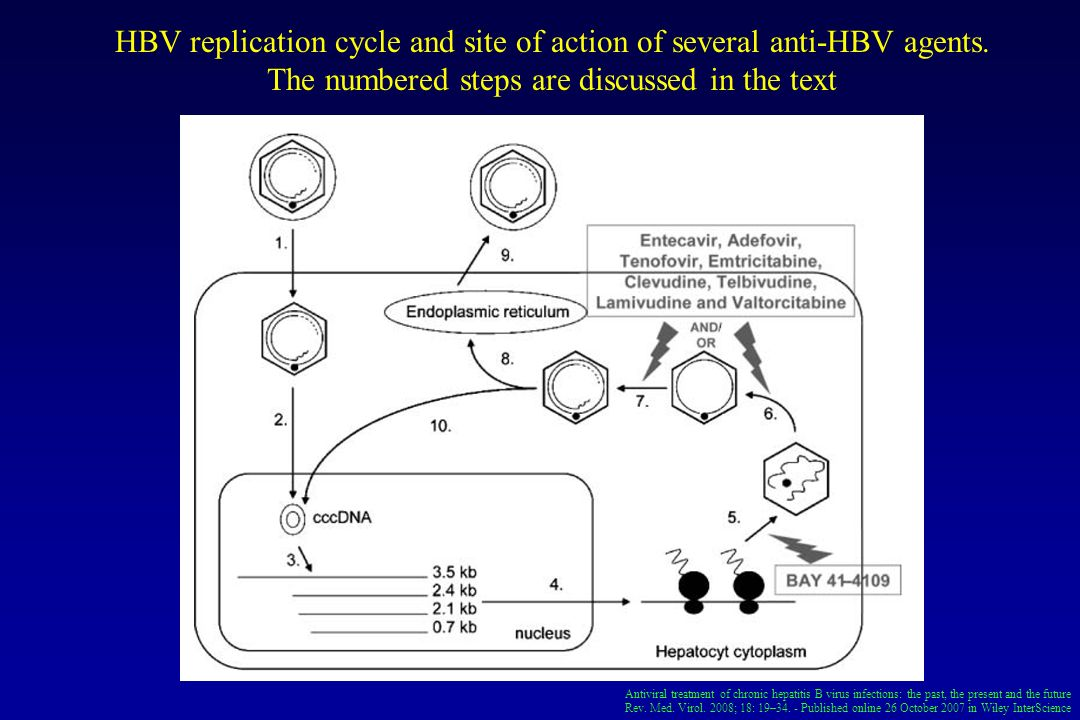 HBV replication cycle and site of action of several anti-HBV agents