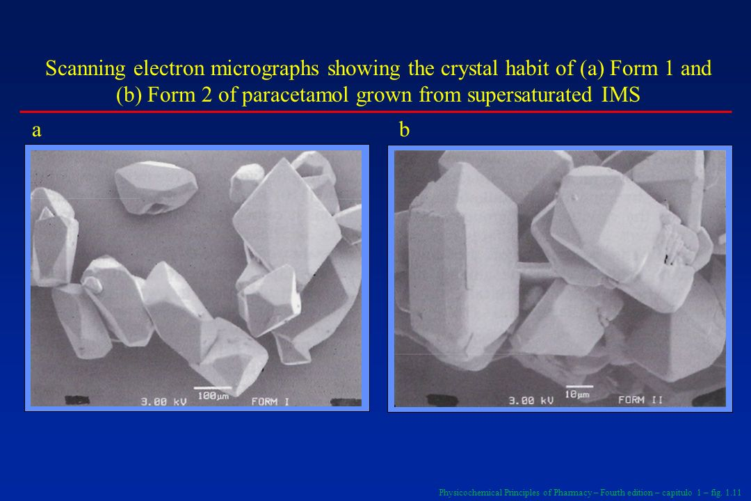 Scanning electron micrographs showing the crystal habit of (a) Form 1 and (b) Form 2 of paracetamol grown from supersaturated IMS