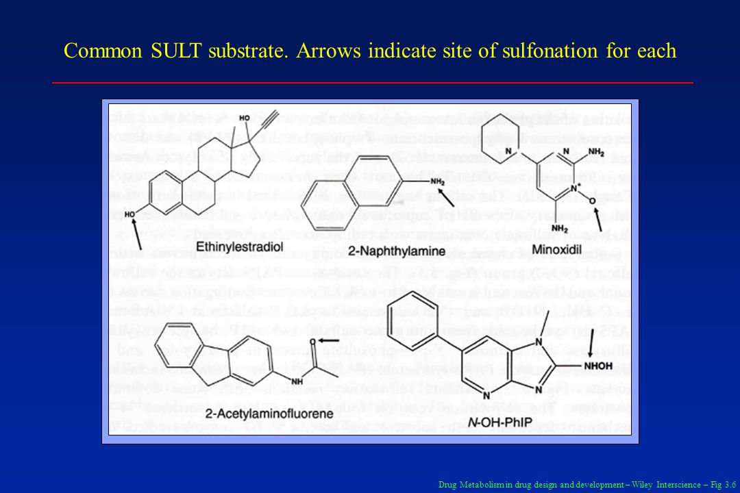 Common SULT substrate. Arrows indicate site of sulfonation for each