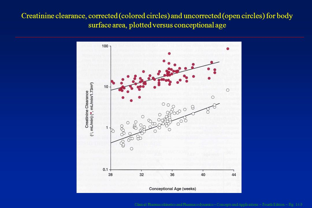 Creatinine clearance, corrected (colored circles) and uncorrected (open circles) for body surface area, plotted versus conceptional age