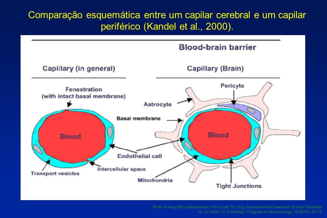 Comparação esquemática entre um capilar cerebral e um capilar periférico (Kandel et al., 2000).