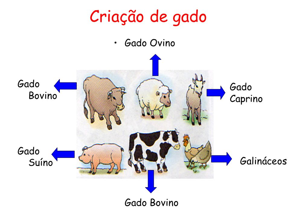 Criação de gado Gado Ovino Gado Caprino Gado Bovino Galináceos