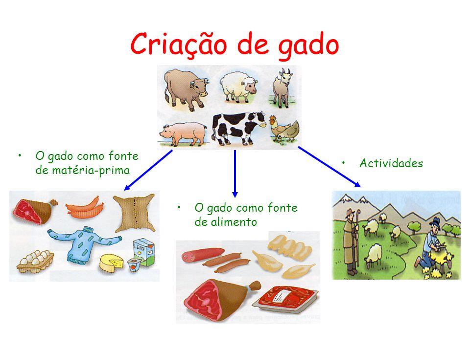 Criação de gado O gado como fonte de matéria-prima Actividades