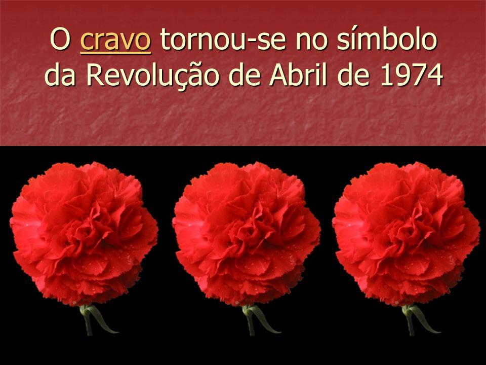 O cravo tornou-se no símbolo da Revolução de Abril de 1974