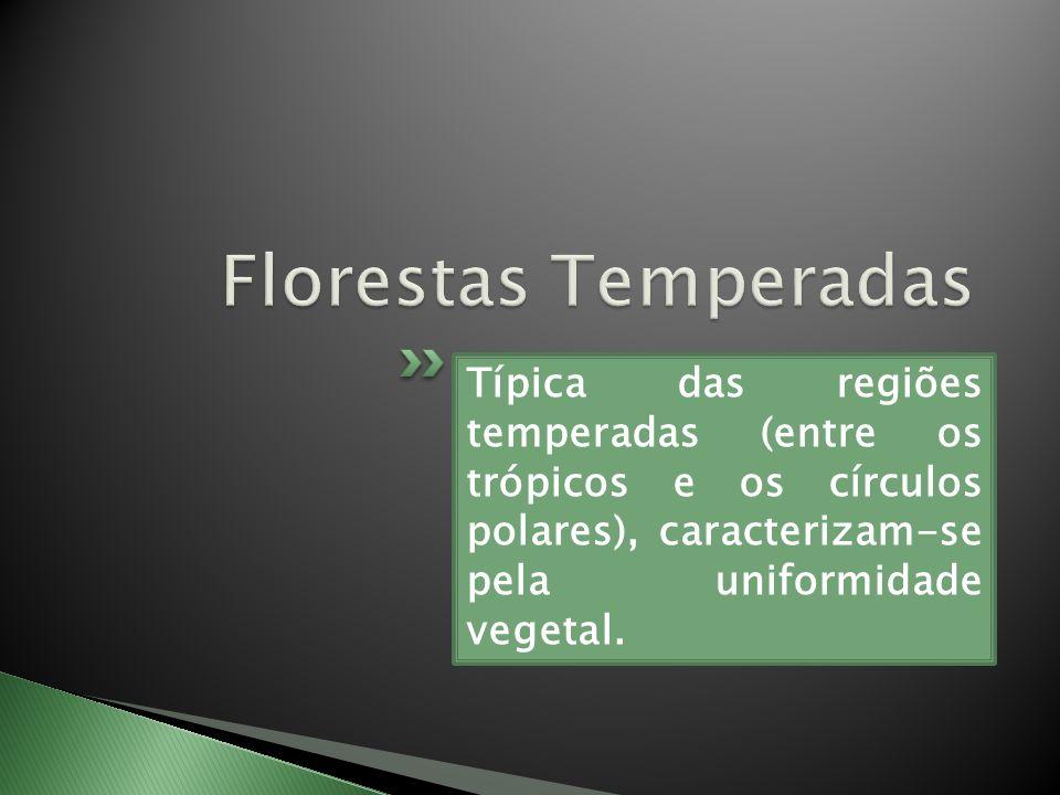 Florestas Temperadas Típica das regiões temperadas (entre os trópicos e os círculos polares), caracterizam-se pela uniformidade vegetal.