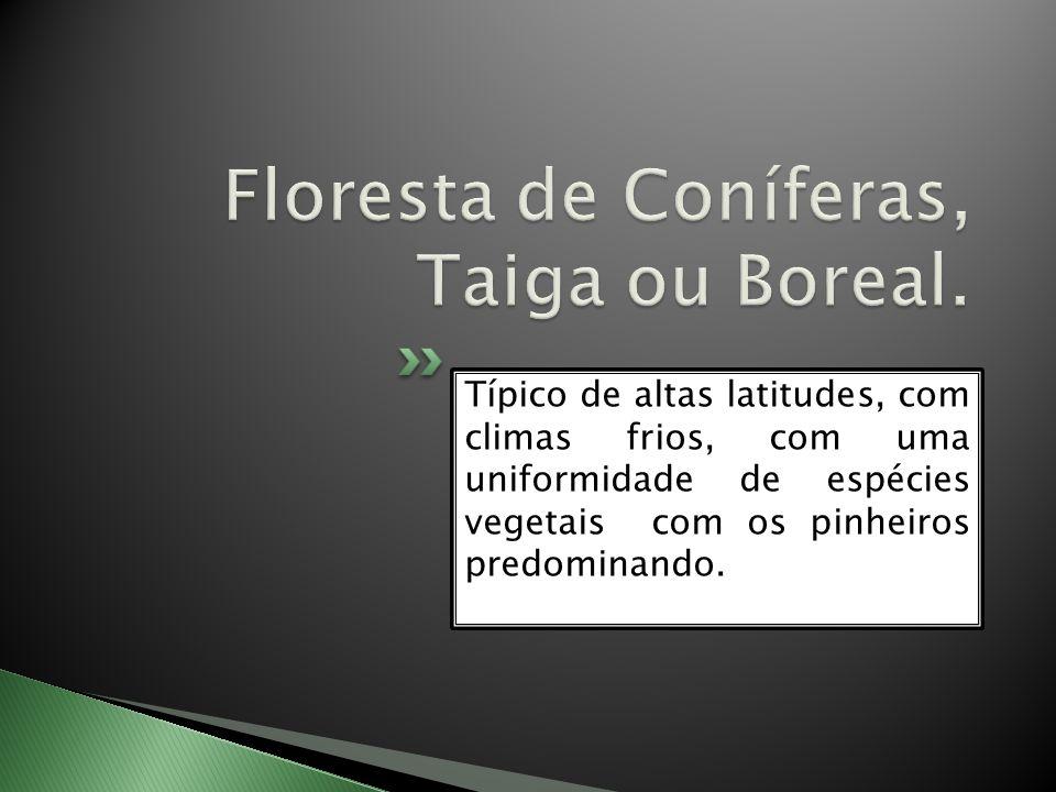 Floresta de Coníferas, Taiga ou Boreal.