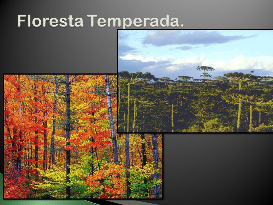 Floresta Temperada.