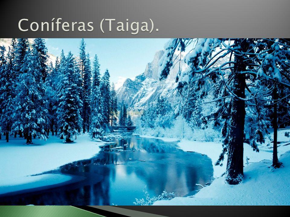 Coníferas (Taiga).