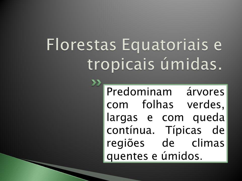 Florestas Equatoriais e tropicais úmidas.