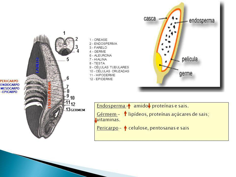 Endosperma – amido proteínas e sais.