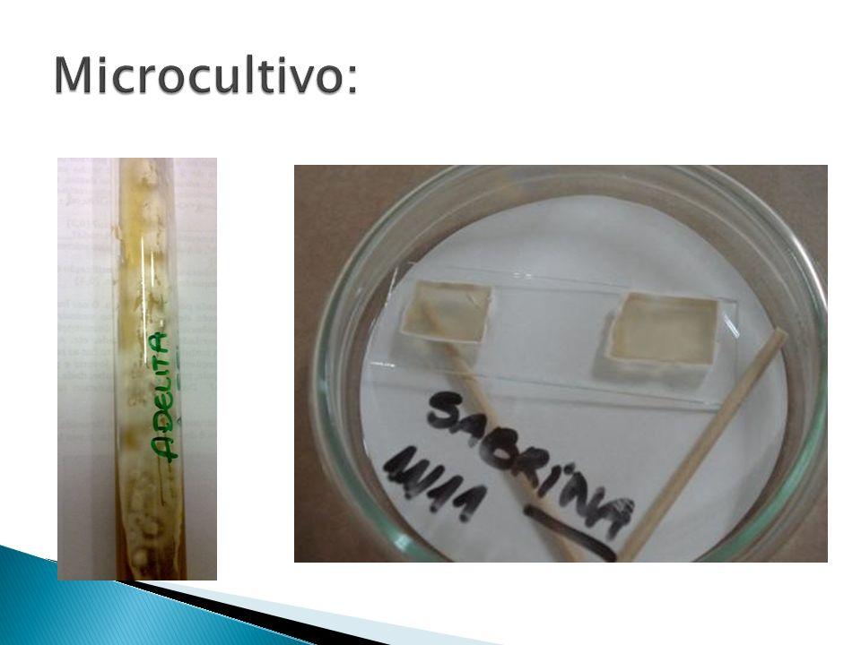 Microcultivo:
