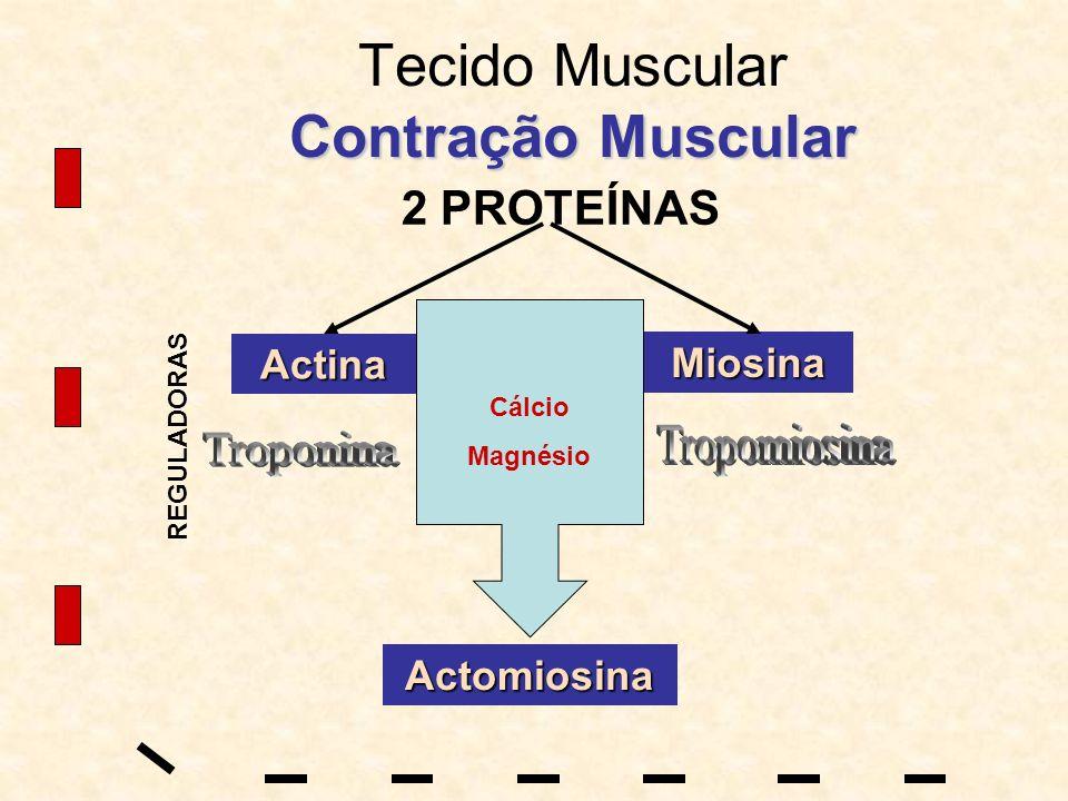 Tecido Muscular Contração Muscular