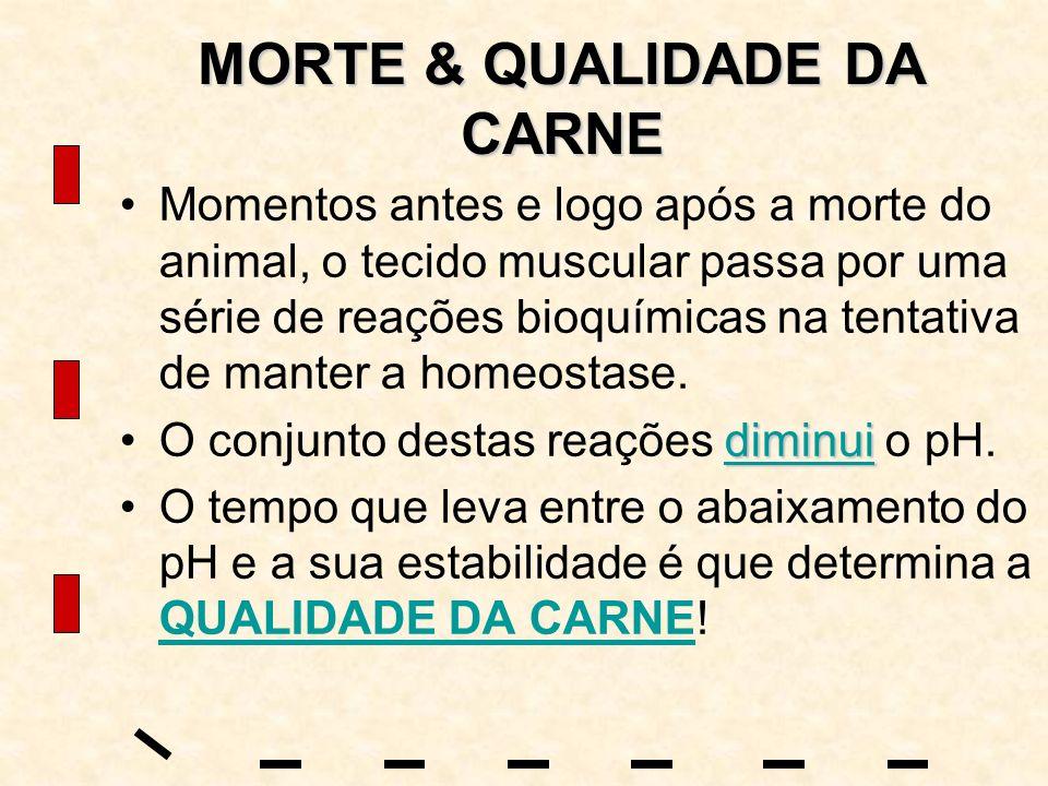 MORTE & QUALIDADE DA CARNE