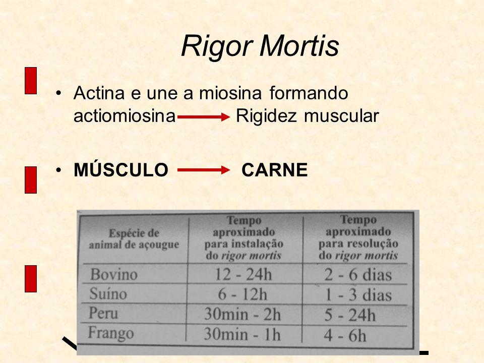 Rigor Mortis Actina e une a miosina formando actiomiosina Rigidez muscular.