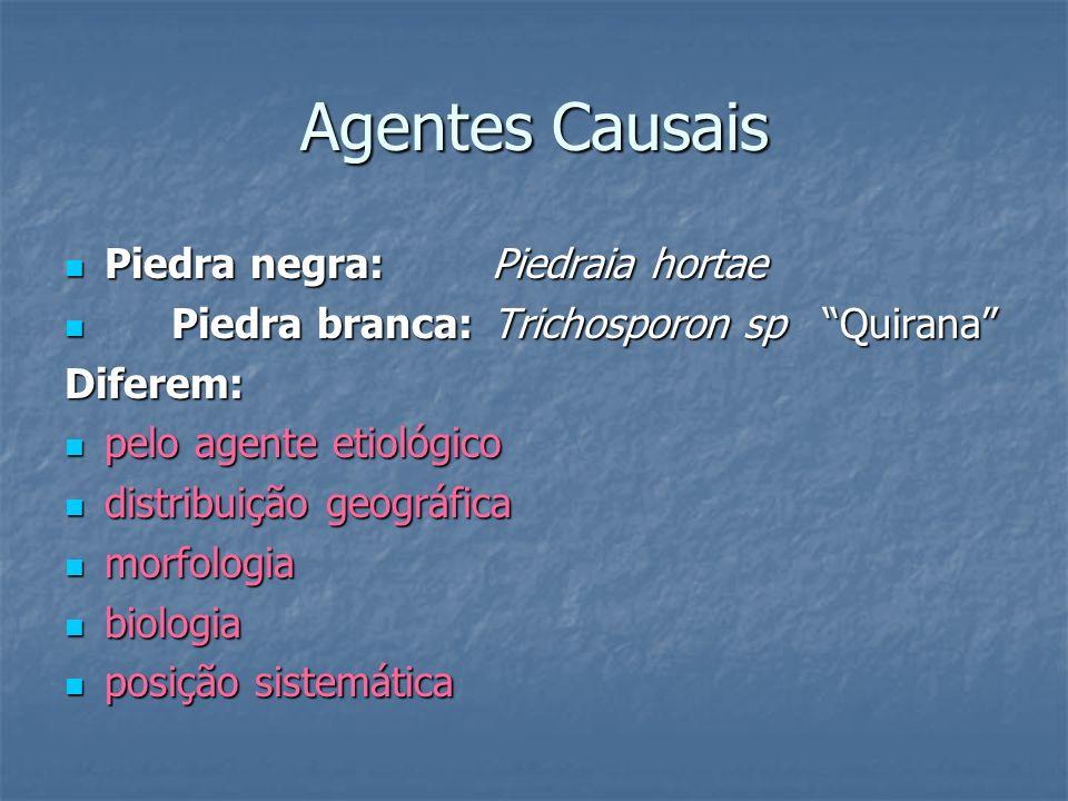 Agentes Causais Piedra negra: Piedraia hortae