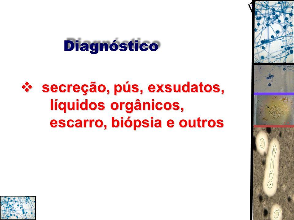 Diagnóstico secreção, pús, exsudatos, líquidos orgânicos, escarro, biópsia e outros