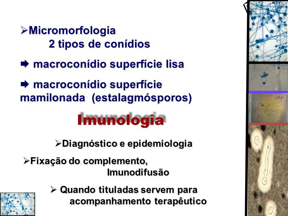 Imunologia Micromorfologia 2 tipos de conídios