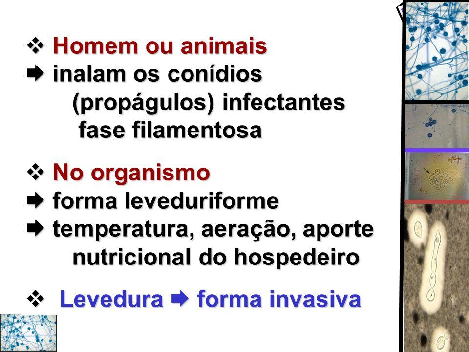 Homem ou animais.  inalam os conídios. (propágulos) infectantes