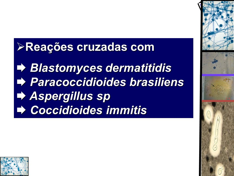 Reações cruzadas com  Blastomyces dermatitidis  Paracoccidioides brasiliens  Aspergillus sp  Coccidioides immitis.