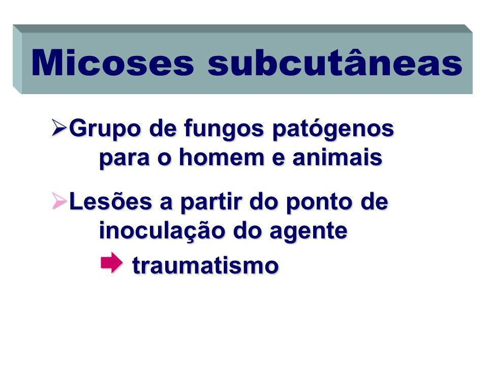 Micoses subcutâneas Grupo de fungos patógenos para o homem e animais