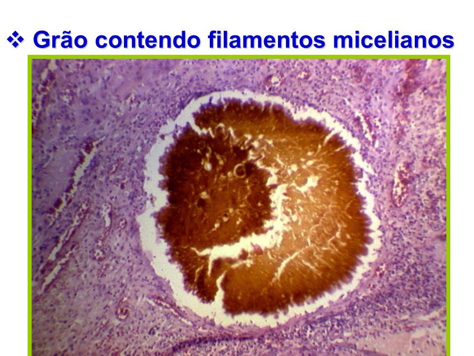 Grão contendo filamentos micelianos