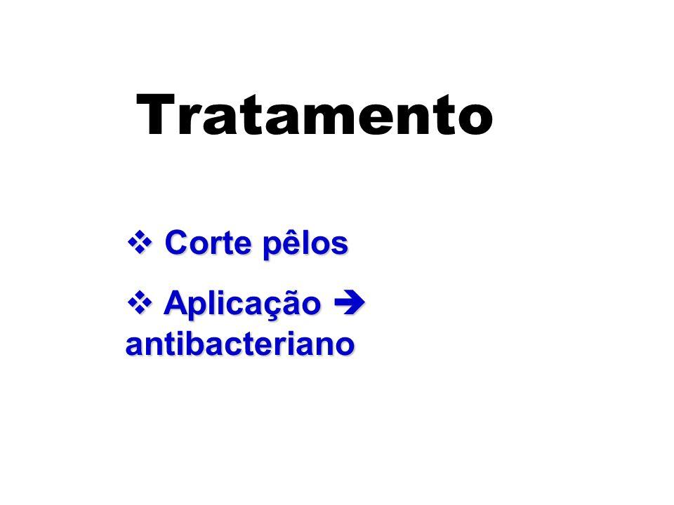 Tratamento Corte pêlos Aplicação  antibacteriano