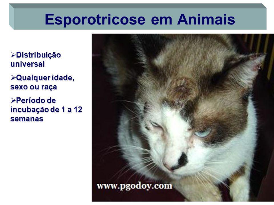 Esporotricose em Animais