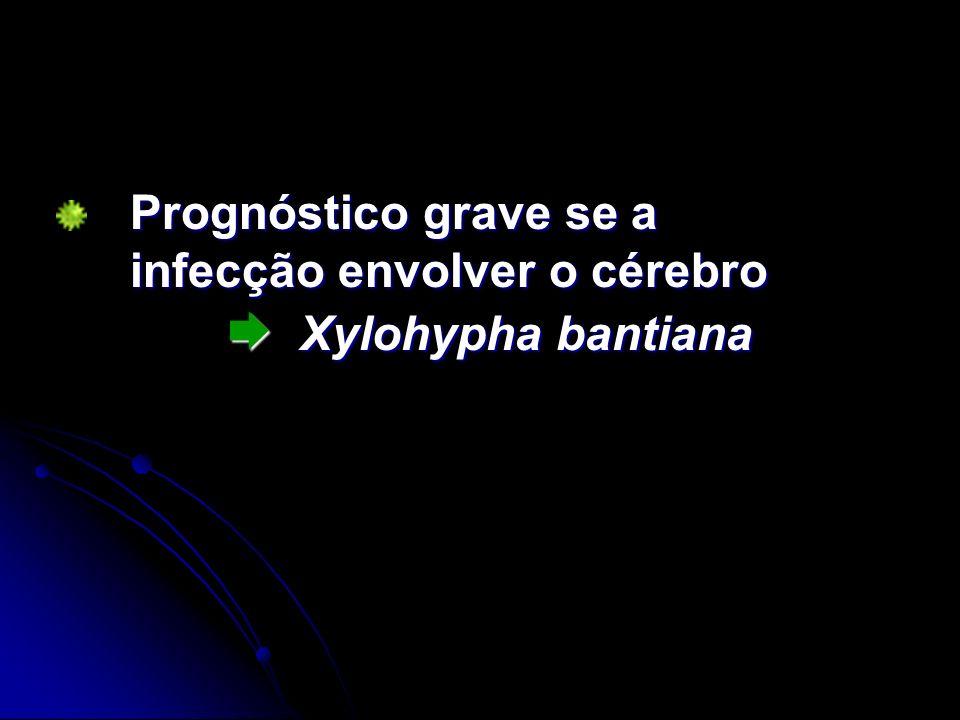 Prognóstico grave se a infecção envolver o cérebro