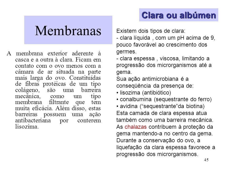 Membranas Clara ou albúmen